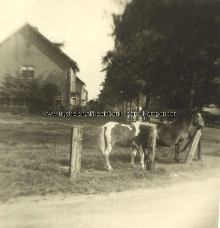 Paardeweitje