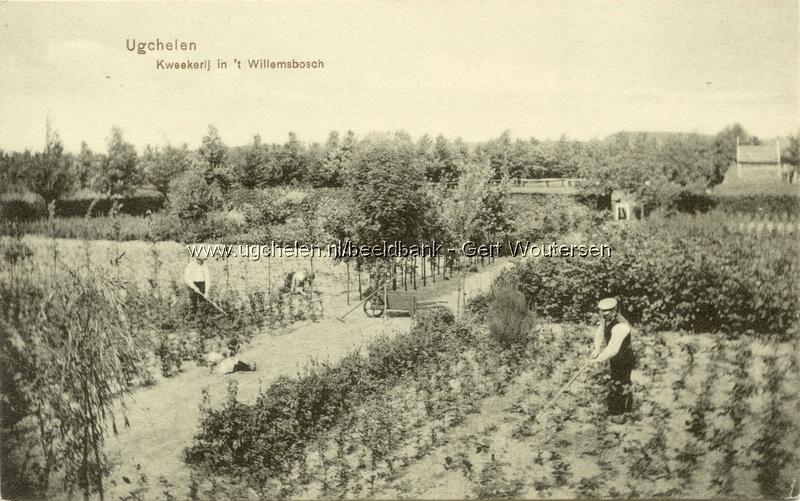 Willemsbosch